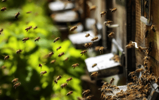 Propolis: An All-Natural Do-It-All in Dentistry